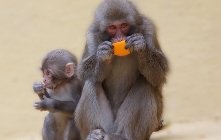 Hoped-for 'AIDS cure' drug fails miserably in monkey experiments; HIV outwits Big Pharma yet again